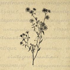 Printable Image Wild Daisy Flower Graphic Wildflower Digital Download Antique Clip Art. High resolution, high quality digital illustration. This printable digital illustration graphic can be used for making prints, fabric transfers, pillows, papercrafts, and much more. This graphic is high quality at 8½ x 11 inches large. Transparent background PNG version included.