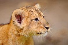 Proud little cub!