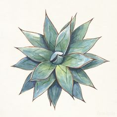 Agave in watercolor on Bechance by Aaron Apsley. Agave rosettes. Watercolor and Ink.
