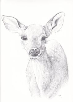 Drawing For Beginners So soft and inquisitive silent, and still. The deer in forest and trees Deer Drawing, Forest Drawing, Nature Drawing, Animal Sketches, Animal Drawings, Pencil Drawings, Cool Art Drawings, Drawing Sketches, Sketching