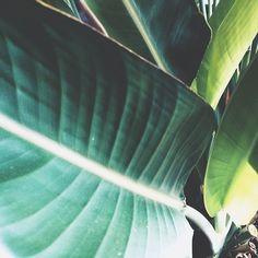 missed my #palm #tree 🌴🌴🌴