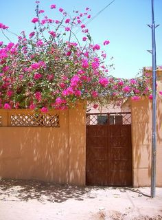 A common gate scene from almost any street in Khartoum.