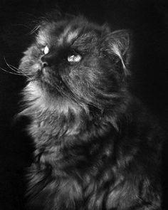 Невероятные рисунки кошек простым карандашом (22 картинки)