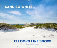 The sand in Destin & South Walton is so white, it's easily mistaken as snow. Don't believe us? Come see for yourself! Silly Cats, Panama City Beach, Find People, The Dunes, Come And See, Paddle Boarding, Seaside, Serenity, Coastal