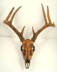 Deer Skull Taxidermy Painted Antlers  Black by MayaJadeCreations, $365.00