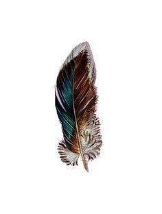 watercolor tattoo | Mallard Feather Original Watercolor Nightly Study by jodyvanB