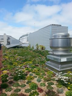 More Green Roofs Arriving to San Francisco