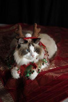 "Santa's other ""reindeer"""