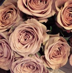 Totally in love with the Cappuccino rose 🌹 Types Of Flowers, Love Flowers, Colorful Flowers, Floral Wedding, Wedding Flowers, Rose Varieties, Flower Names, Wedding Flower Inspiration, Bride Bouquets