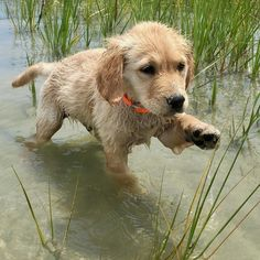 mom, seriously, I can't work another second in this rice paddy  Follow for more: http://pin.it/7IjHIkD