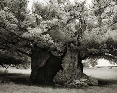 Ancient Trees: Woman Spends 14 Years Photographing Earth's Oldest Trees