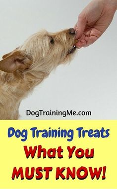 Dog training treats are a great training tool to get your pup to obey commands and learn new tricks. We tell you how to use treats for dog training the right way in our article.