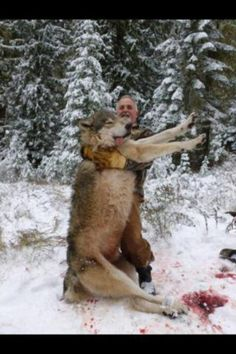 What's the real price of that fur on a wolf please save the wolves!