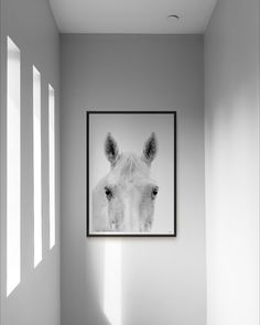 This black and white original photographic horse print captures the true soul and inquisitive nature of silk our horse model. Crisp details and fine details this wall art print is perfect for the bedroom, nursery or a Scandinavian inspired monochrome interior. #scandi #scandinavian #interiordesign #monochromestyle #monochromenursery #print #art #wallart #decor #home #homedecor #photography #horses #horseart #ohheypepper #blackandwhite #roomdecor #nursery #bedroomdecor #nurserydecor #bedroom Monochrome Interior, Monochrome Nursery, Modern Prints, Modern Wall Art, Highland Cow Art, Wall Art Prints, Fine Art Prints, Horse Wall Art, Scandinavian Art