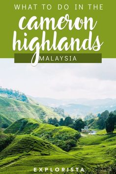 Here's all you need to know about how to visit and things to do in the Cameron Highlands, a stunning escape from bustling Kuala Lumpur in Malaysia! Malaysia Itinerary, Malaysia Travel Guide, Malaysia Trip, Japan Travel Tips, Asia Travel, Kuala Lumpur, Cool Places To Visit, Places To Travel, Travel Destinations