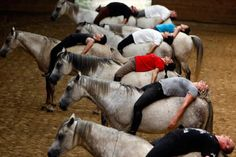 DownDog Yoga with Pets and Animals: Horseback yoga. From the Downdog Diary Yoga… All The Pretty Horses, Beautiful Horses, Animals Beautiful, Cute Animals, Horse Therapy, Horse Training, Training Tips, Horse Pictures, Horse Care