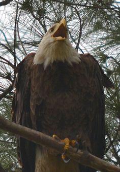 scream eagle 5562 by jetskibrian