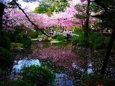 Japanese zen garden.