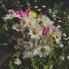 picking wildflowers #midsommar