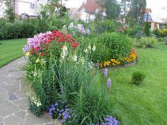 Возможности флоксов не ограничиваются обрамлением садовых дорожек