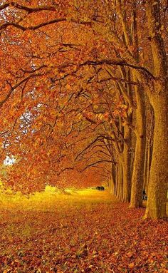 """""""I'm so glad I live in a world where there are Octobers."""" L.M. Montgomery"""