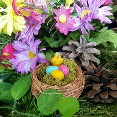 This funny little chick with an egg she'll on his head cracks me up! Get it?  #whattheshell #crackup #egg #nest #chick #easter #enchantedacorn #fairygarden #miniaturegarden #minigarden #fairy #etsyshop