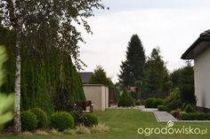 Jak więcej błędów nie popełnić...... - strona 100 - Forum ogrodnicze…