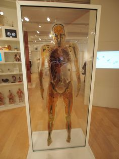 At the Wellcome Collection - the plastinated body slice of a human being.