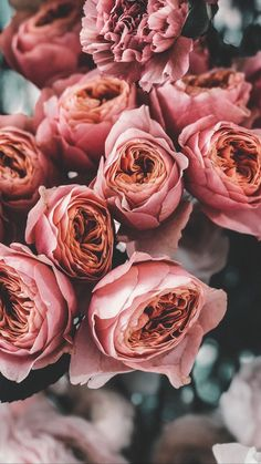 Lovely Window Design Ideas With Plants Flower Phone Wallpaper, Cute Wallpaper Backgrounds, Pretty Wallpapers, Flower Backgrounds, Aesthetic Iphone Wallpaper, Aesthetic Wallpapers, Flower Aesthetic, Flower Mandala, Flowers Nature