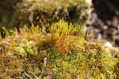 In moss like this there live often more than one thousand different species. So we should protect our nature.