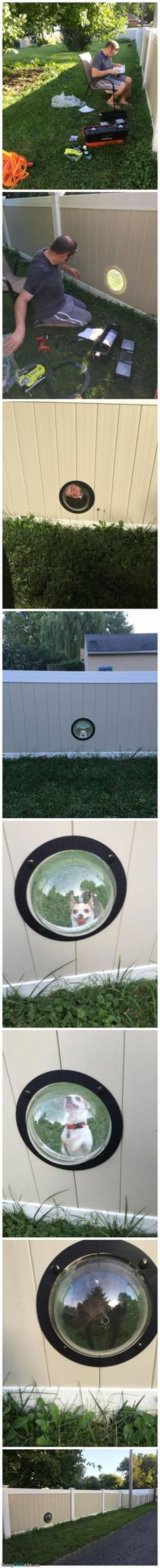 Fence With A Special Dog Window - funnydogsite.com #dogs #funny #cute