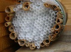 Lieveheersbeestjes huis DIY