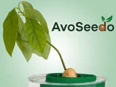 AvoSeedo - Grow your own Avocodo Tree with ease!'s video poster