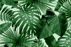 """""""Wlidly Mint"""" Wild Thing wallpaper from Flavor Paper."""