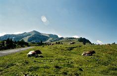 Natur- und Wandergebiet Steinplatte Waidring Spaces, Mountains, Nature, Travel, Stone Panels, Hiking, Traveling, Naturaleza, Trips