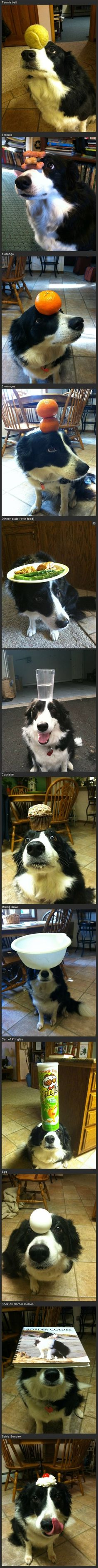 Border Collie's are too smart for most people. Unless you're going to give your dog plenty of work: do the breed a favorite and don't buy a border collie.
