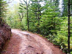 Kuamoo Trail  Nounou Mt Trail Sleeping Giant , Kauai Hawaii