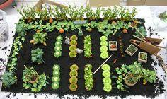 Miniature Garden Plants & Accessories by Belara Beach Originals