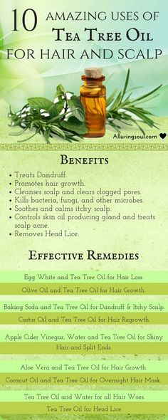 Tea tree oil for hair is considered as one of the best herb's oil to treat hair problems. It removes dandruff, promotes hair growth & has many more benefits.:
