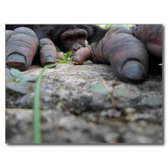 Monkey photography postcard to buy