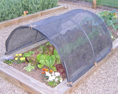 shade cloth for raised beds to protect greens from summer heat