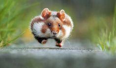 And The Winners Are.... 13 Comedy Wildlife Photography Awards ... see more at PetsLady.com ... The FUN site for Animal Lovers