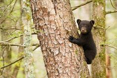Black Bear Cub by Hisham Atallah on 500px