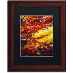 Trademark Fine Art I Believe Canvas Art by Philippe Sainte-Laudy Black Matte, Wood Frame, Size: 16 x 20, Brown