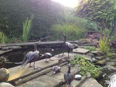 Out by the pond. NGS Gardens open for charity - Garden