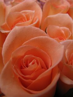 Peach is my favorite color of roses. I don't think anyone knows that either as I continue to receive red ones... (I guess I shouldn't complain; at least I'm getting flowers!)