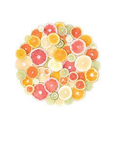 citrus | STILL   (mary jo hoffman)