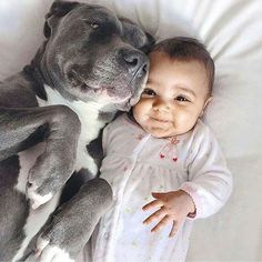 Here are a little baby and a sweet, big ole pitbull. What's not to love.   www.bullymake.com