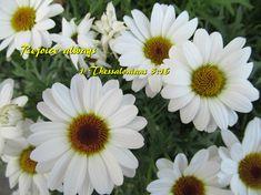 Rejoice always 1 Thessalonians 5:16
