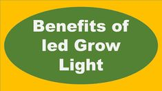 Benefits of led Grow Light In a small scale, people are growing plants indoors for their own pleasure or consumption. On a large sca.